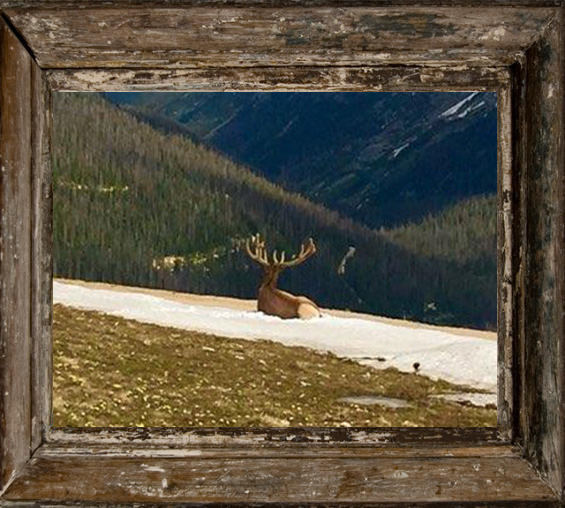I Honestly took this photo, sneaking up on this Elk. He had no idea I was there. He is looking out at this amazing landscape, and while I was standing there...I got EMOTIONAL thinking how lucky I was to actually be able to experience this !